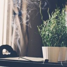 incense burning next to potted plant