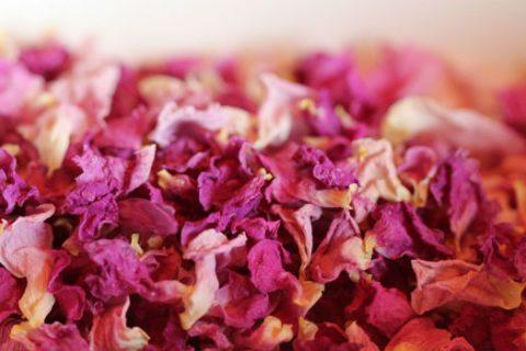 pink dried rose petals